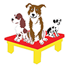 Severnside - Dog Agility Training - North Somerset