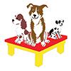 Severnside - Dog Agility Training - North Somerset